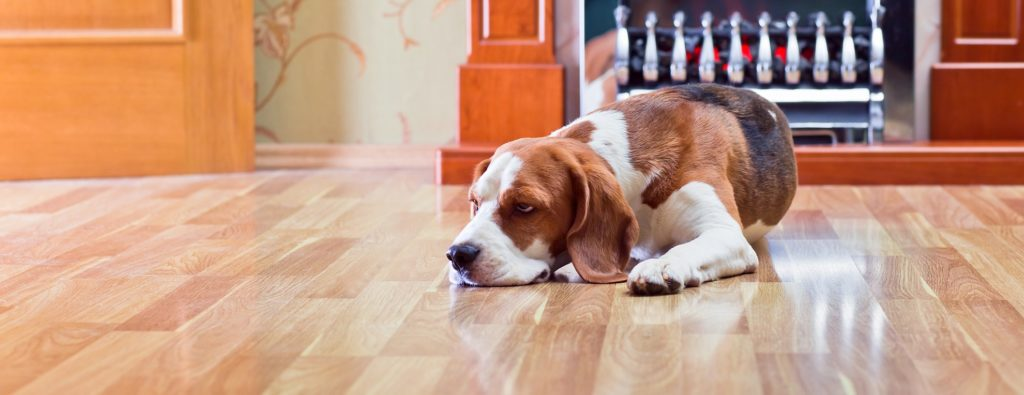 dog sleeping on hardwood flooring ct