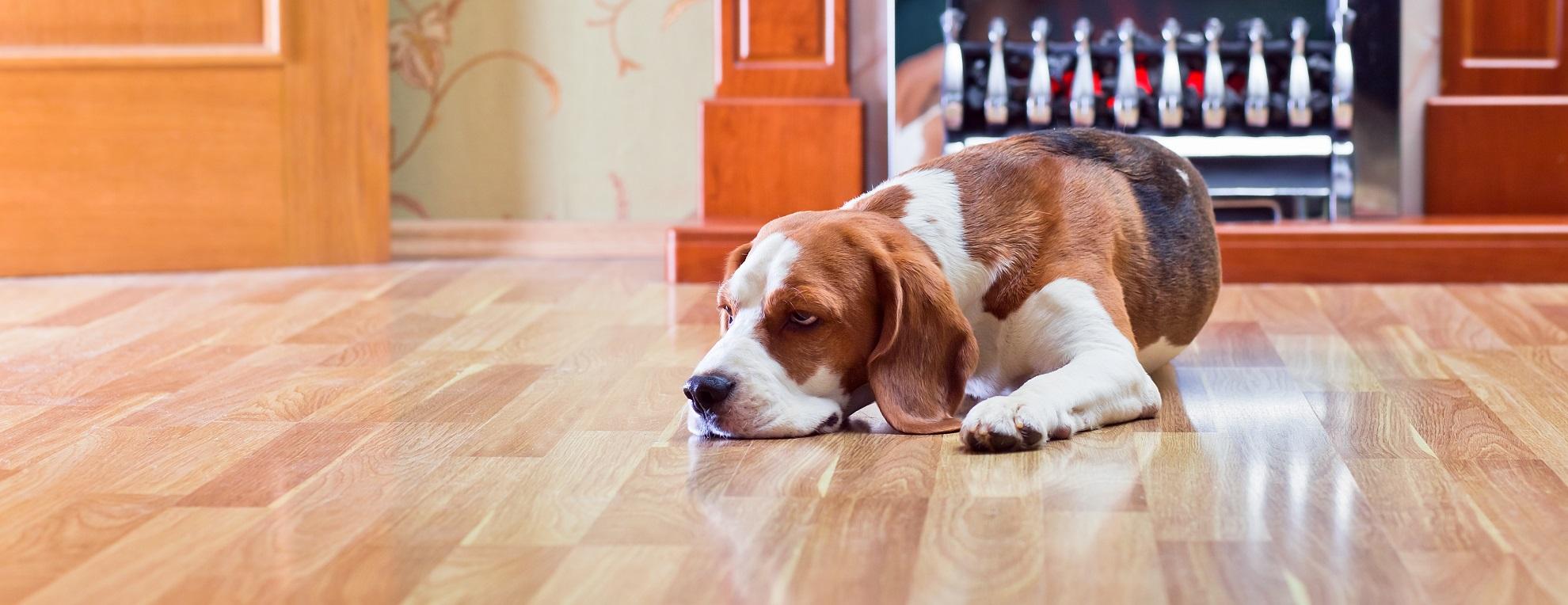 dog sleeping on hardwood flooring ct