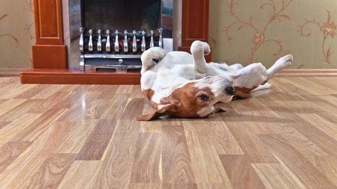 dog on hardwood flooring ct